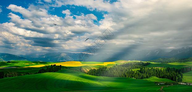 新疆那拉提麦田风光图片