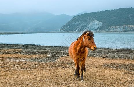湖泊边的马匹图片