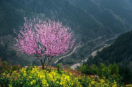 高山上,桃花深处有人家图片
