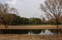 森林公园一景图片