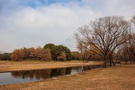 秋天的森林公园图片