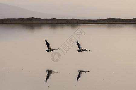 青海湖海鸥图片