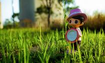 草地花卉图片