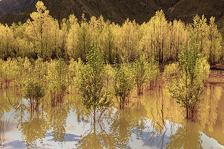 拉萨的金色池塘图片