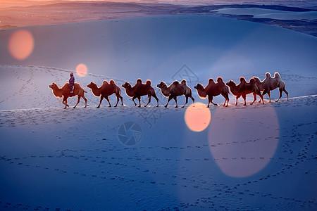 沙漠里的驼队图片