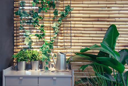阳台绿色盆栽图片