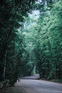 竹林深处的道路图片