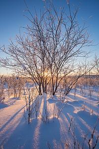 阿尔山雪原日出图片
