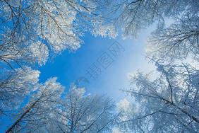 阿尔山的雾凇和蓝天图片