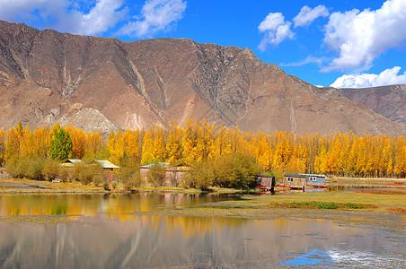 西藏 秋色图片