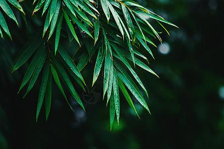 雨后竹叶素材图片图片
