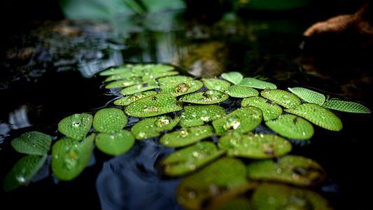 虎丘湿地公园之植物图片