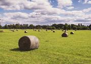 收获后的秋季麦田草垛图片