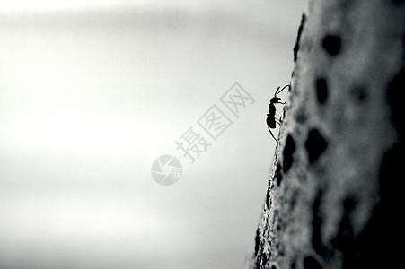 努力向上爬的蚂蚁背景图片