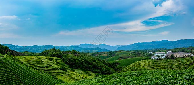 四明山茶园全景图片
