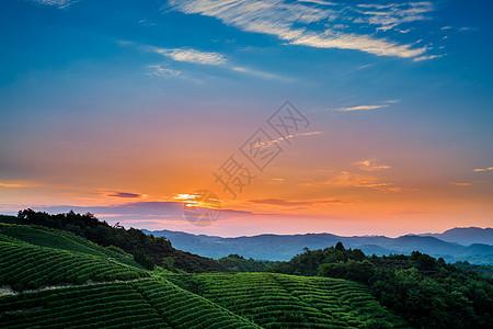 茶山晨曦图片
