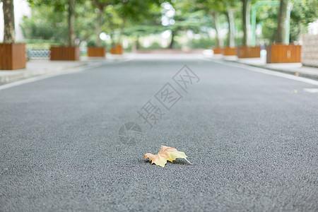落在校园林荫道上的一片枯叶图片