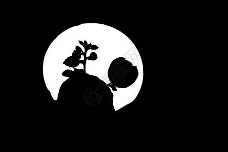 黑夜中盛开的玫瑰背景图片