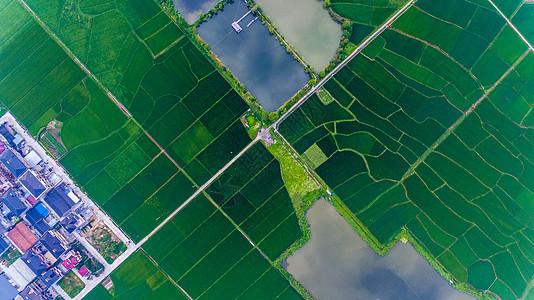 垂直拍摄的农田图片