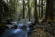 九溪红杉林图片