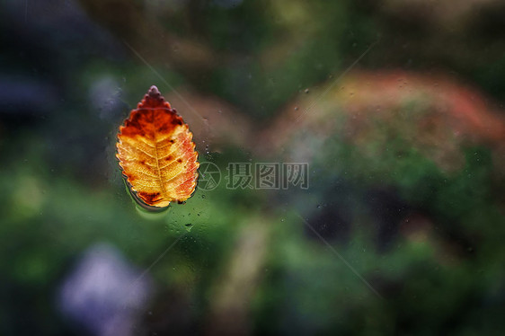 雨中车窗上的树叶图片