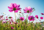 阳光下的花朵图片