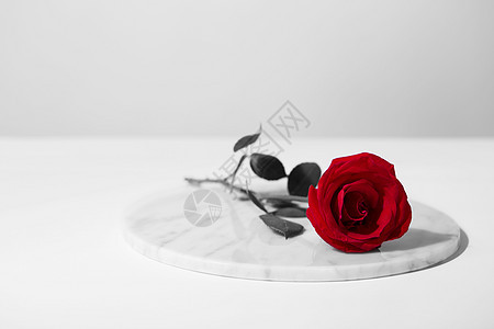 玫瑰花的忧郁图片