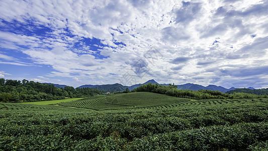 大气的茶山全景图图片