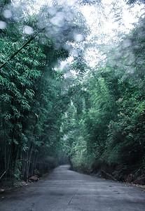 竹林间的小路图片