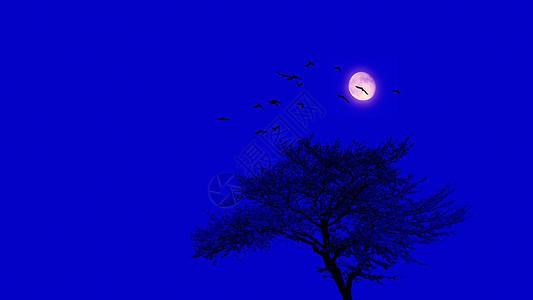 静谧的中秋月夜图片
