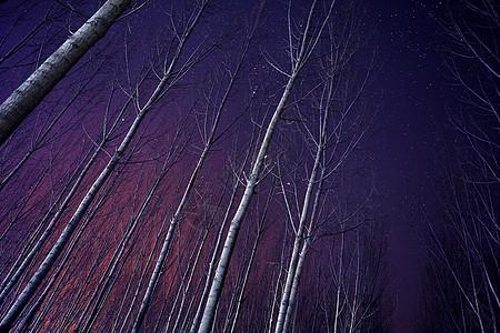 星空素材森林星空图片