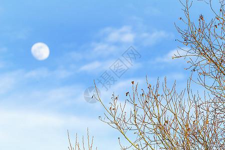 中秋节月亮图片