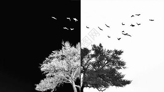 树梢上的鸟图片