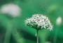 清新植物图片