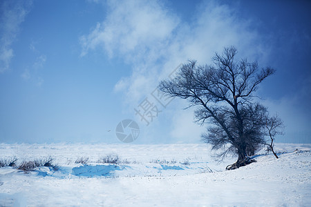 雪地中的树图片