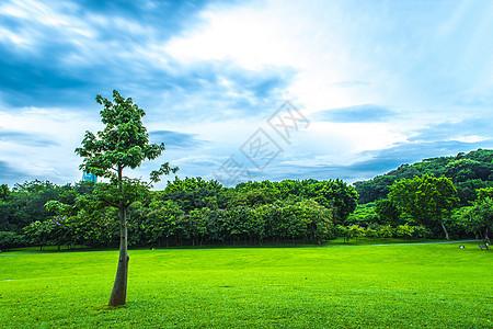 城市草地绿化树林云朵天际线图片