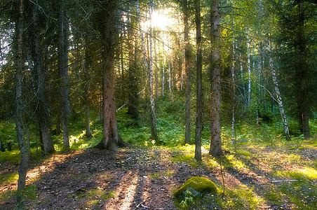 新疆禾木日落白桦林图片