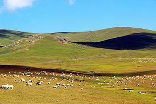 风吹草低见牛羊图片