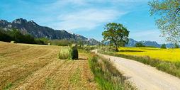 绿色田园风光500613017图片