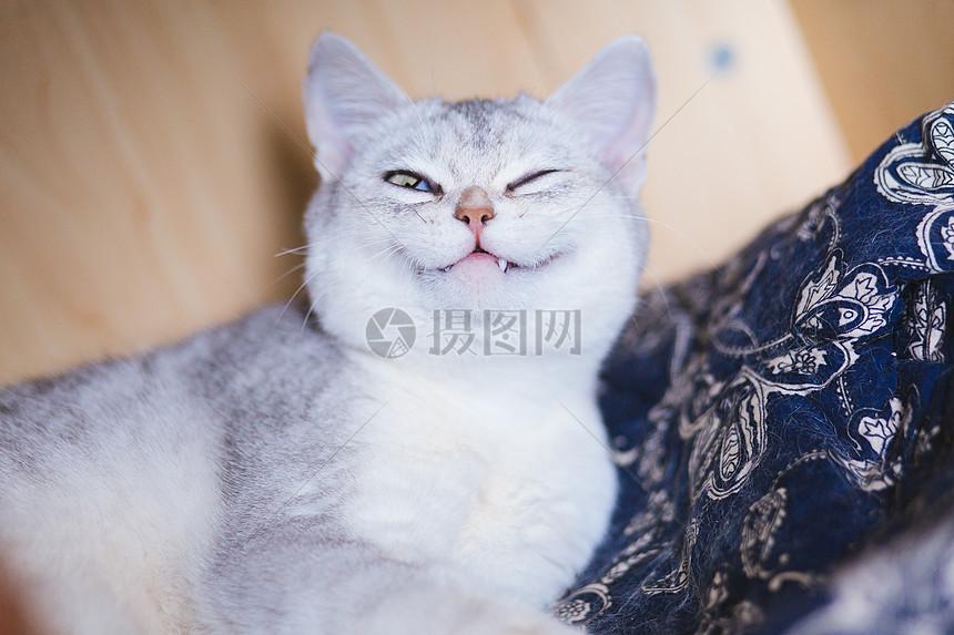 半闭眼睛笑着的猫咪