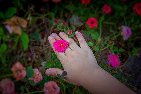 小女孩的手 花花戒指图片