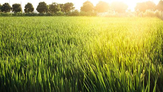 夕阳下的田野图片