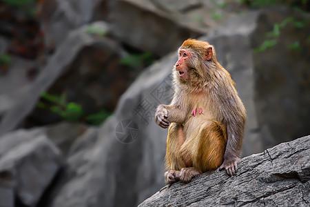 山中的猴子图片