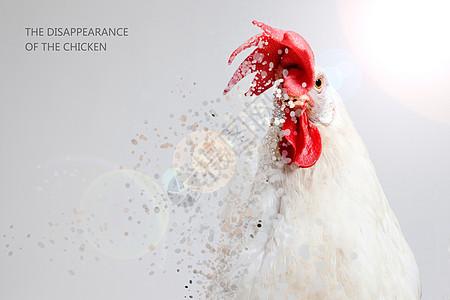 大公鸡创意图片图片