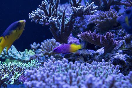 海底世界各种鱼类和生物图片