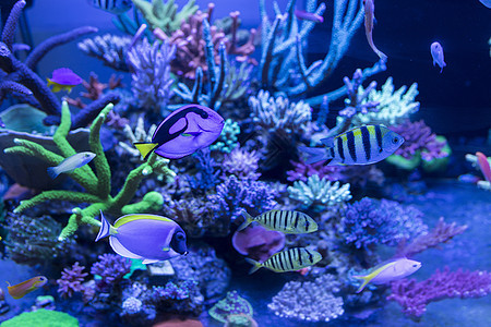 海底鱼和生物图片