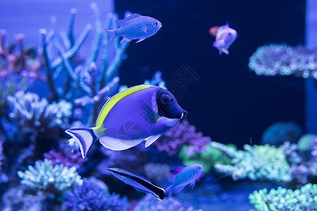 海底世界各种鱼和生物图片