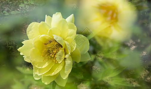 花开盛夏图片