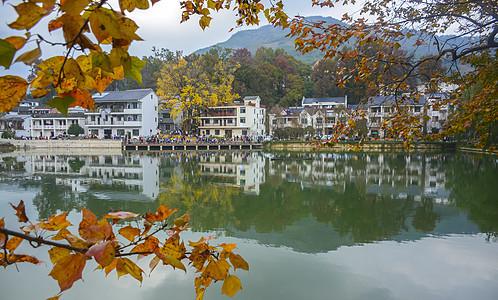 杭州临安指南村银杏湖面唯美秋色图片