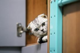 小猫探出头图片